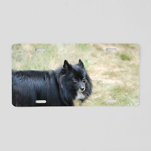 Sweet Pomeranian Aluminum License Plate