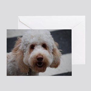 Cute Poodle Greeting Card