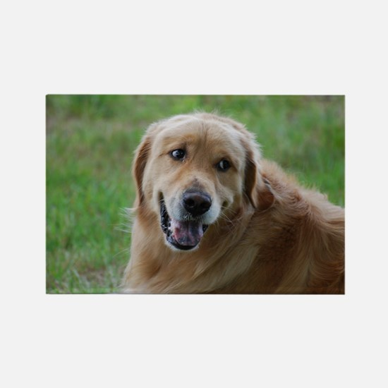 Sweet Goldens Rectangle Magnet