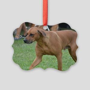 Pet Rhodesian Ridgeback Picture Ornament