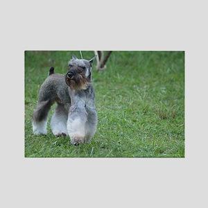 Cute Schnauzer Dog Rectangle Magnet