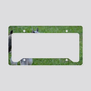Clipped Coat on a Schnauzer License Plate Holder