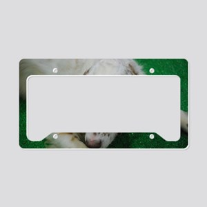 Cute English Setter License Plate Holder