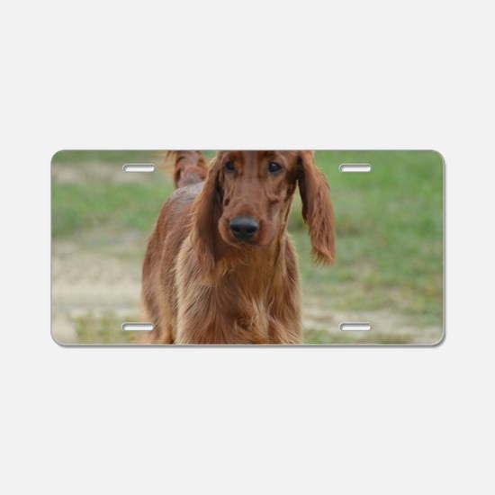 Silky Red Irish Setter Aluminum License Plate