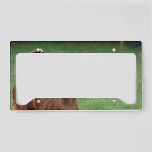 Cute Irish Setter License Plate Holder