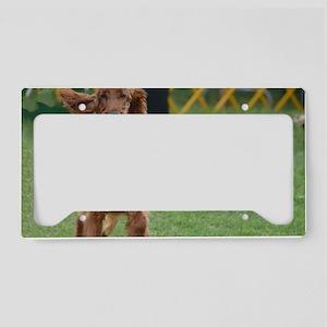 Playful Irish Setter Dog License Plate Holder