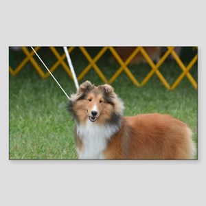 Amazing Sheltie Sticker (Rectangle)