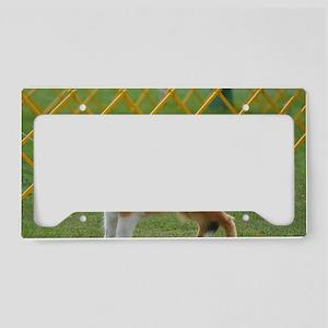 Cute Shetland Sheepdog License Plate Holder