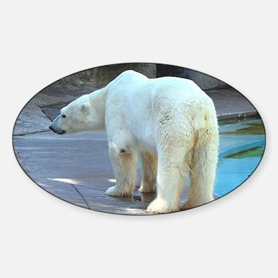 Polar bear in zoo Sticker (Oval)