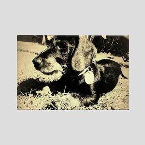 Sweet Dog Rectangle Magnet