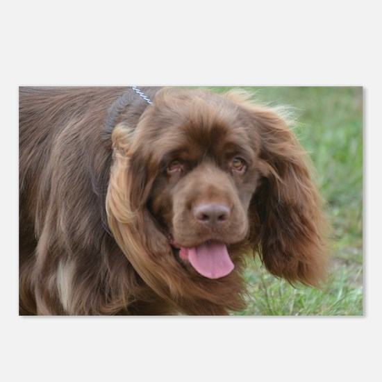 Sussex Spaniel Postcards (Package of 8)