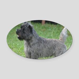 Cute Black Cairn Terrier Oval Car Magnet