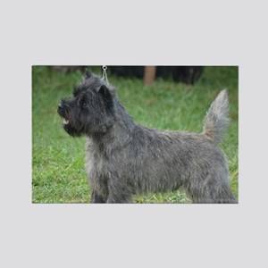 Cute Black Cairn Terrier Rectangle Magnet