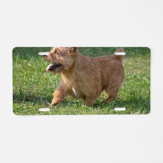 Cute Glen of Imaal Terrier  Aluminum License Plate