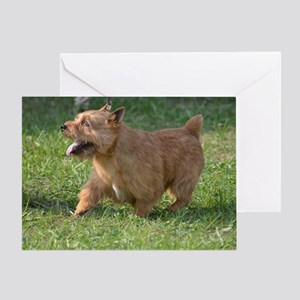 Cute Glen of Imaal Terrier Dog Greeting Card
