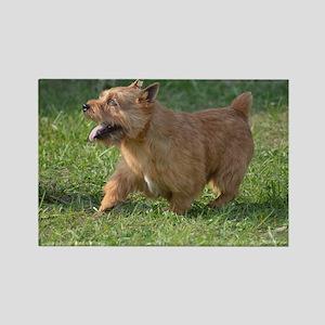 Cute Glen of Imaal Terrier Dog Rectangle Magnet