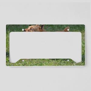 Cute Glen of Imaal Terrier Do License Plate Holder
