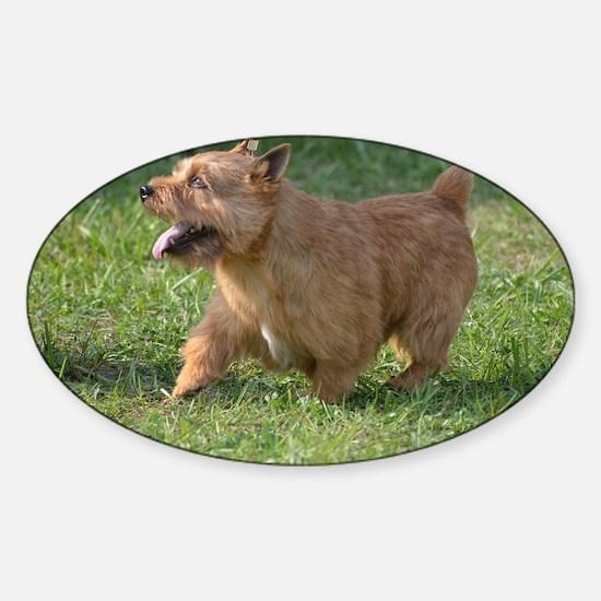 Cute Glen of Imaal Terrier Dog Sticker (Oval)