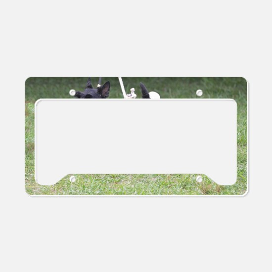 Cute Black Aberdeen Terrier License Plate Holder