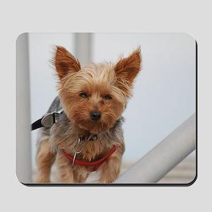 Adorable Yorkshire Terrier Mousepad