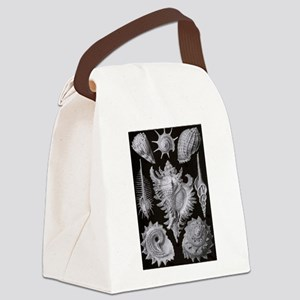 Haeckel Shell Sheet Canvas Lunch Bag