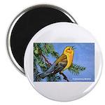 Prothonotary Warbler Bird Magnet
