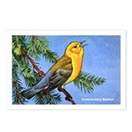 Prothonotary Warbler Bird Postcards (Package of 8)