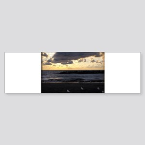 Seagulls Watching Sunset Bumper Sticker