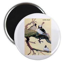 Bufflehead Duck Bird Magnet