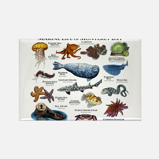 Marine Life of Monterey Bay Rectangle Magnet