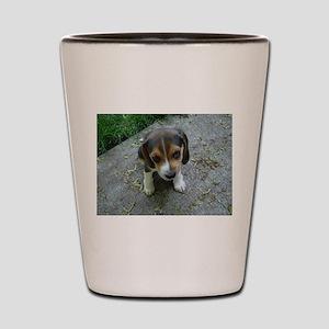 Cute Beagle Puppy Shot Glass