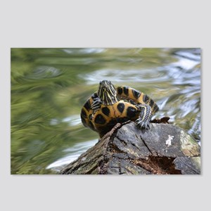 Curious turtle Postcards (Package of 8)