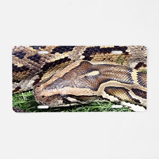 Python in zoo, Arizona, USA Aluminum License Plate