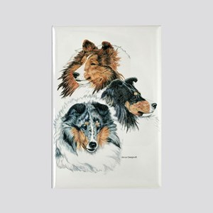 Sheltie Portraits Rectangle Magnet