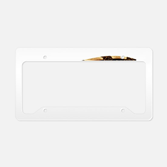 Bitis Gabonica Viper License Plate Holder