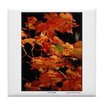 Fall Foliage - Tile Coaster