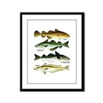 4 Cod fishes c Framed Panel Print