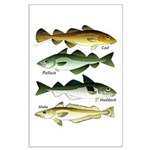 4 Cod fishes c Posters