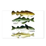 4 Cod fishes c Postcards (Package of 8)