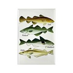 4 Cod fishes Magnets