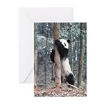 Panda Cub Greeting Cards