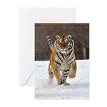 Siberian Tiger Greeting Cards