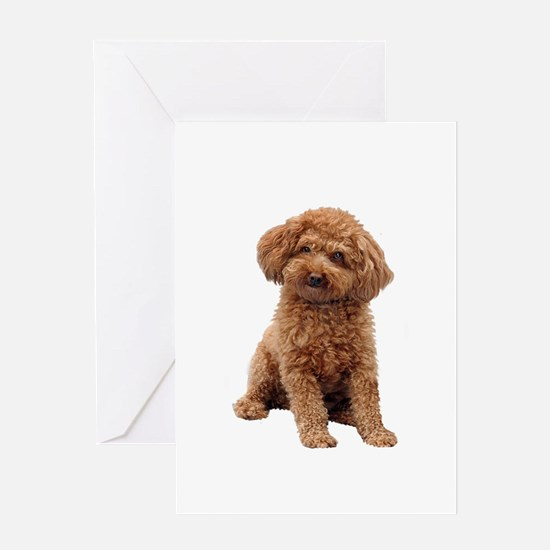 Poodle-(Apricot2) Greeting Card