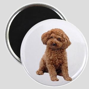 Poodle-(Apricot2) Magnet