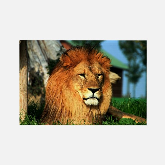 Lion Rectangle Magnet