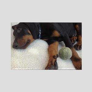 Dobermann puppy Rectangle Magnet