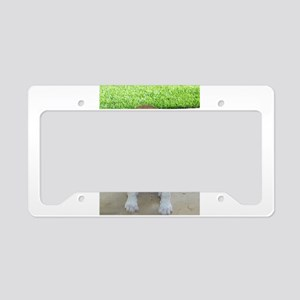Adorable Beagle Puppy License Plate Holder