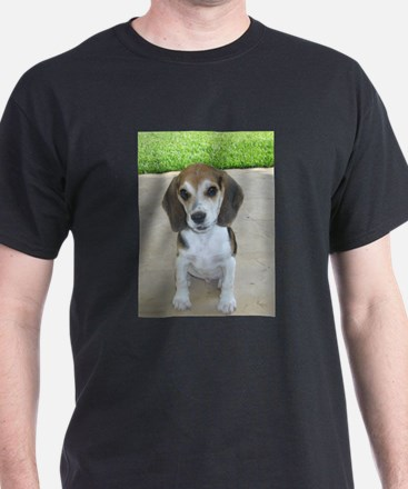 Adorable Beagle Puppy T-Shirt