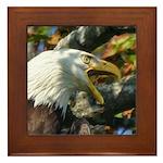 Screaming Eagle Framed Tile