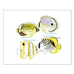 4ButterflyFish Posters